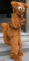 animal, squirrel, costume, hire,