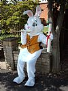 Alice, costume, hire, white rabbit, funstuff, animal, fairy tale,